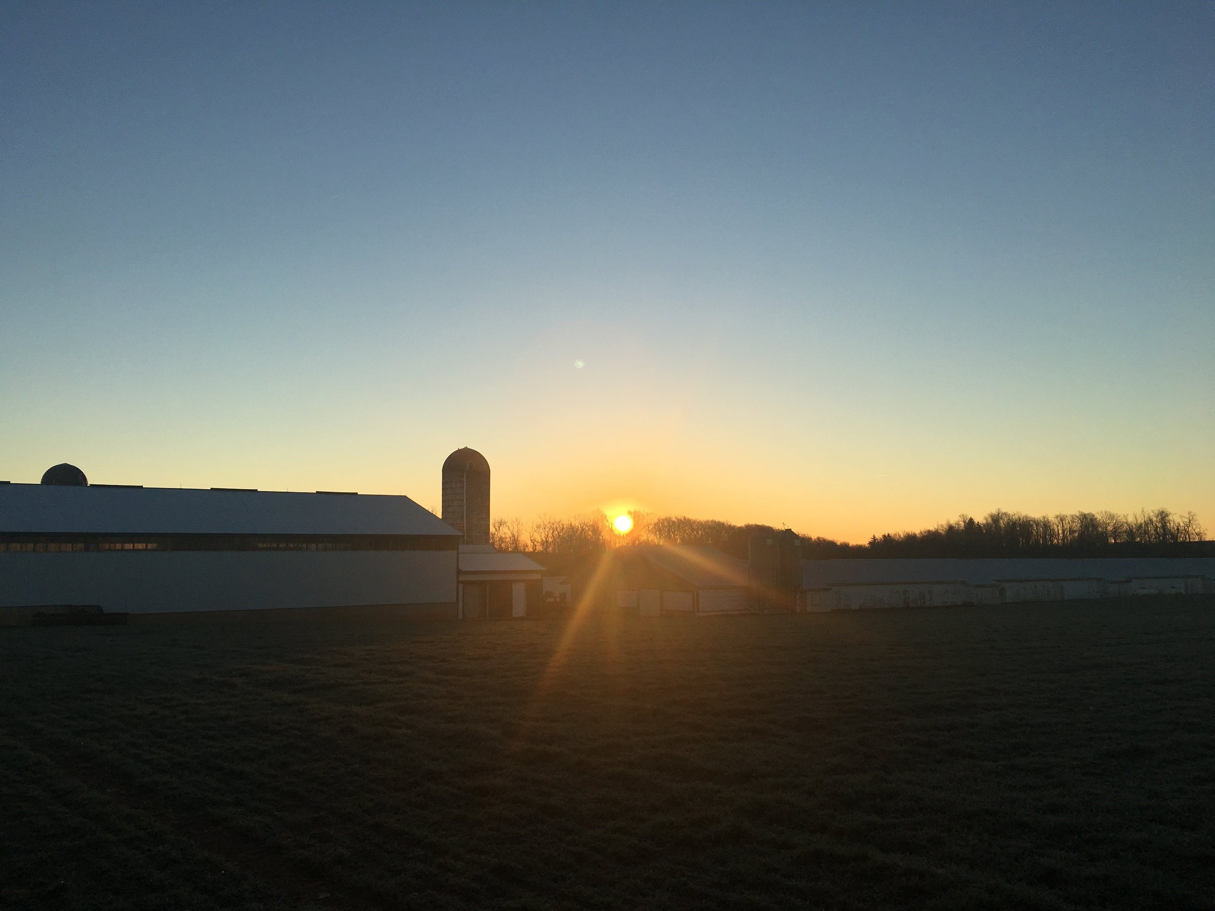 Sunrise at the Maplehofe Dairy Farm in Quarryville