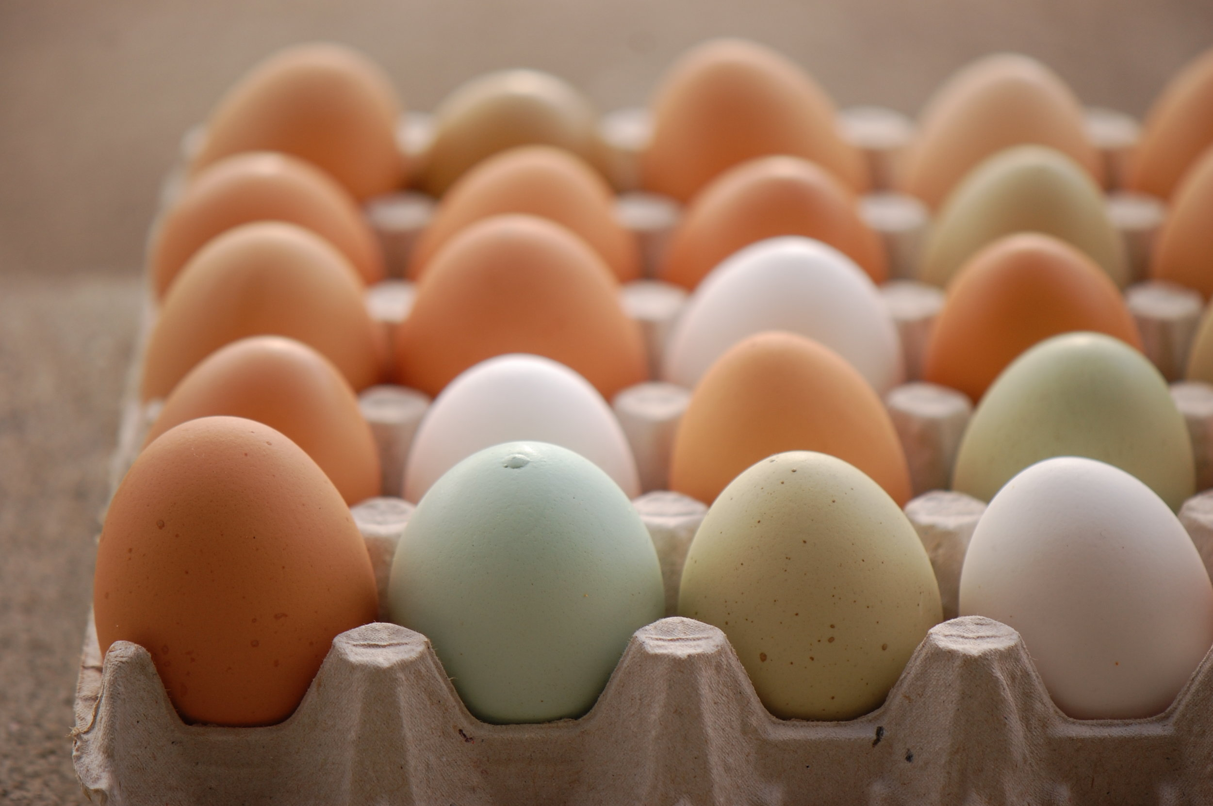 LindleuGrey- Good Ole Eggs