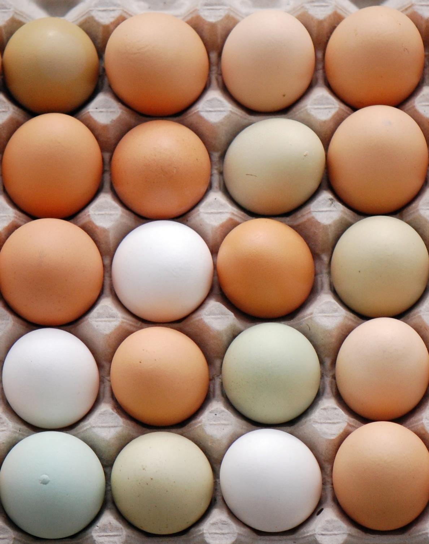 The Egg image 3.JPG