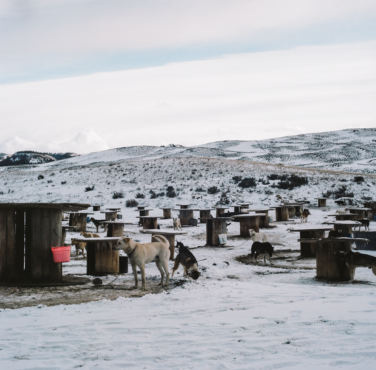 Sled dogs prepare to run at their cable spool kennel near the Wind River Mountain Range.  Shot for Filson. © 2012 - 2016 C.C. Filson Co.