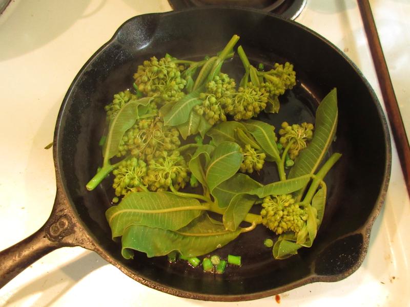 milkweed tops