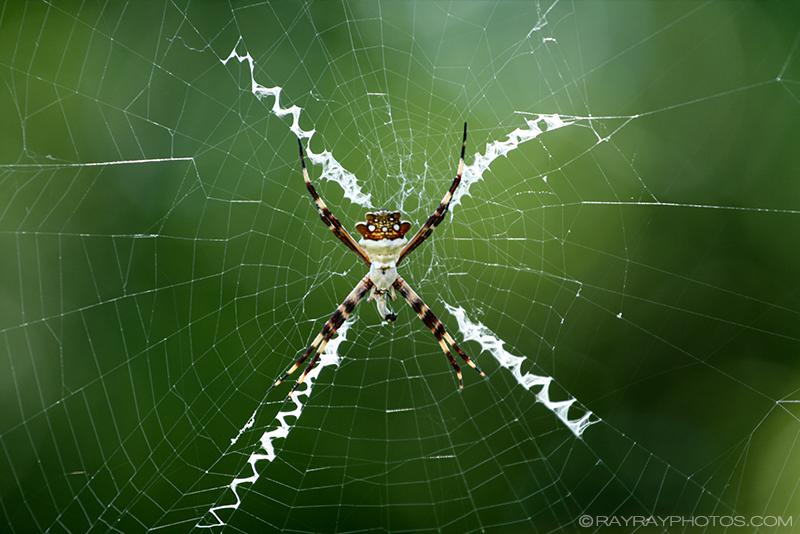 SpiderLR.jpg