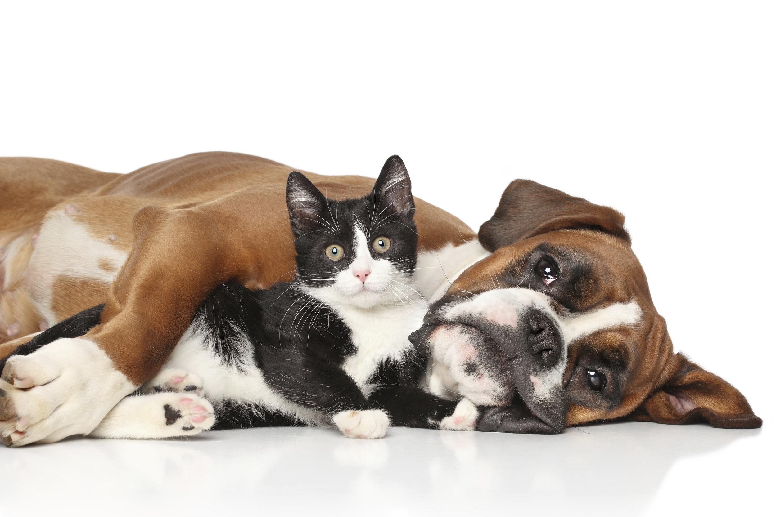 Cat-and-dog-together-000056628486_XXXLarge.jpg