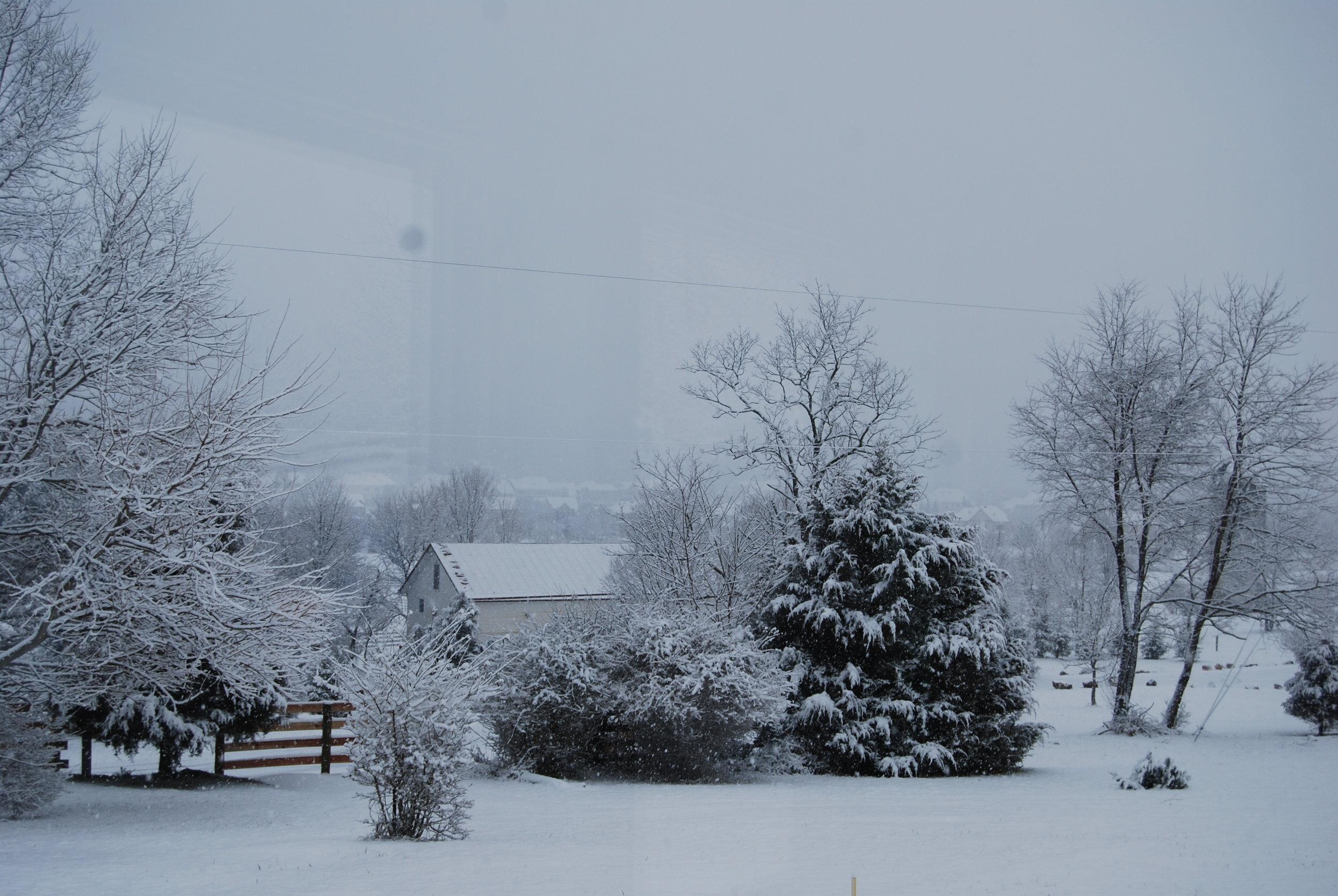Hopkins Grove with snow 2.JPG