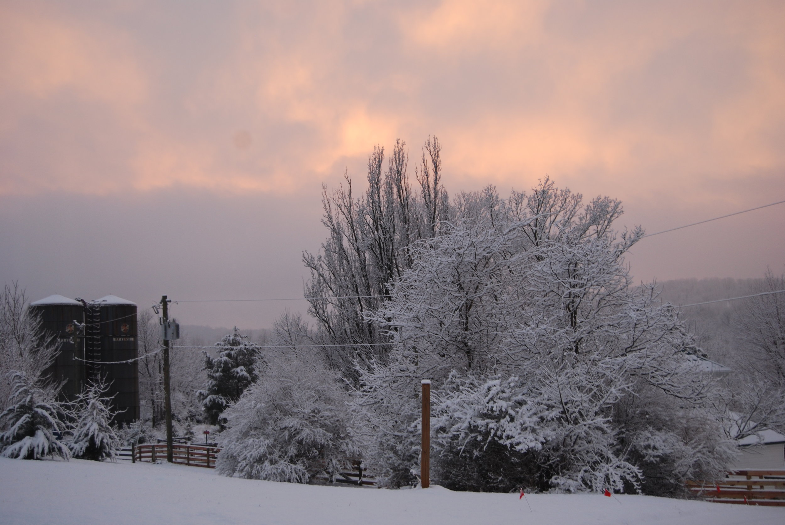 Hopkins Grove with snow with sunset.JPG