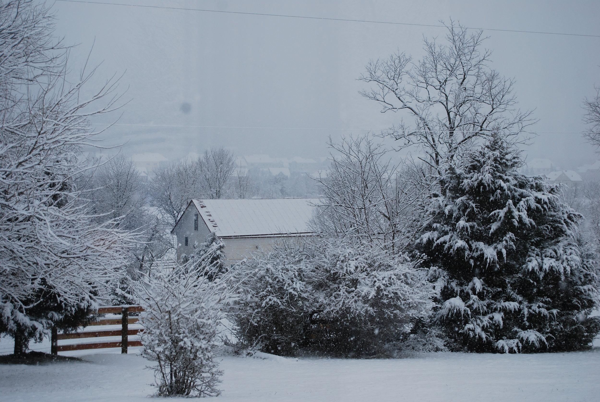 Hopkins Grove with snow.JPG