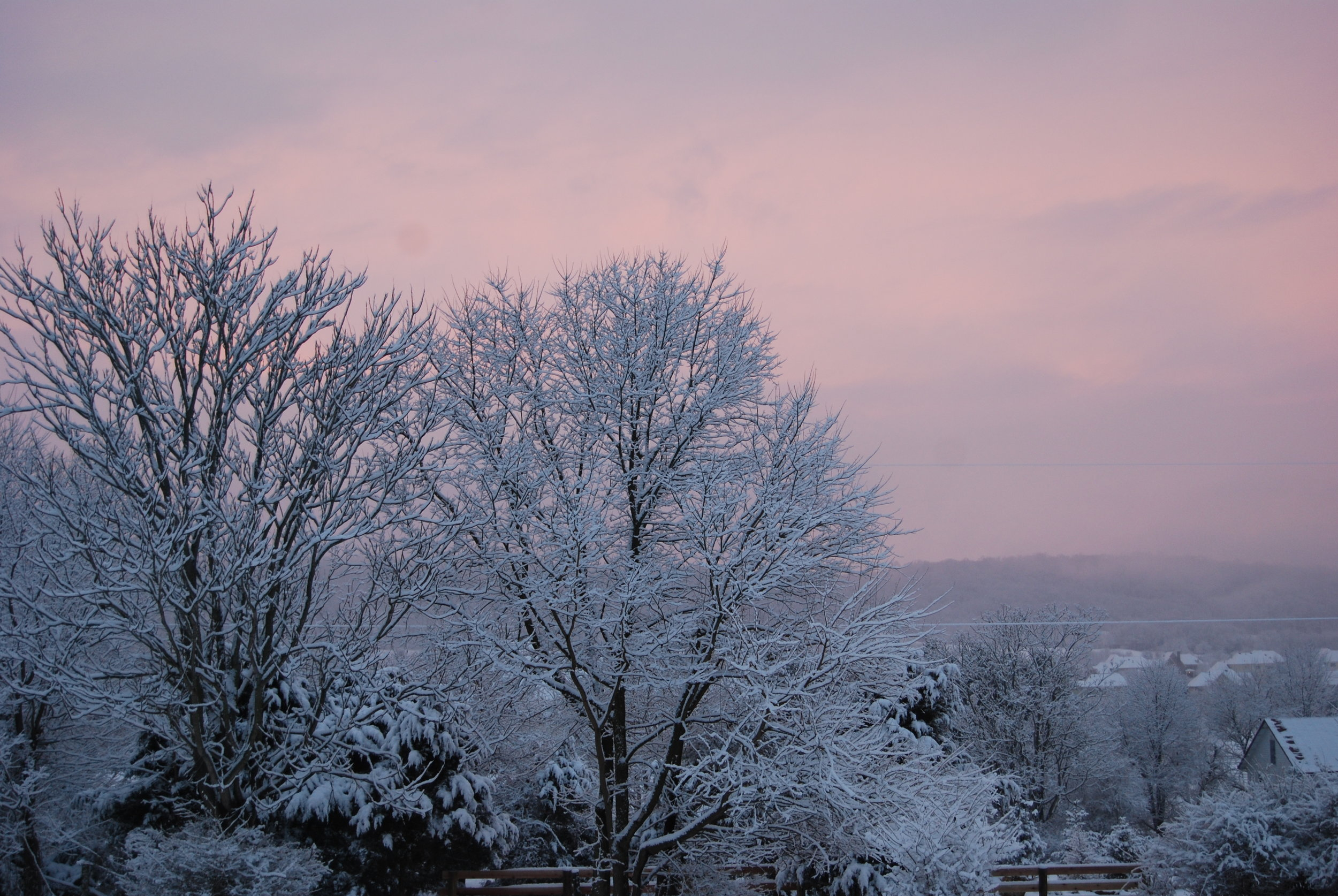 Trees with snow and sunsest.JPG