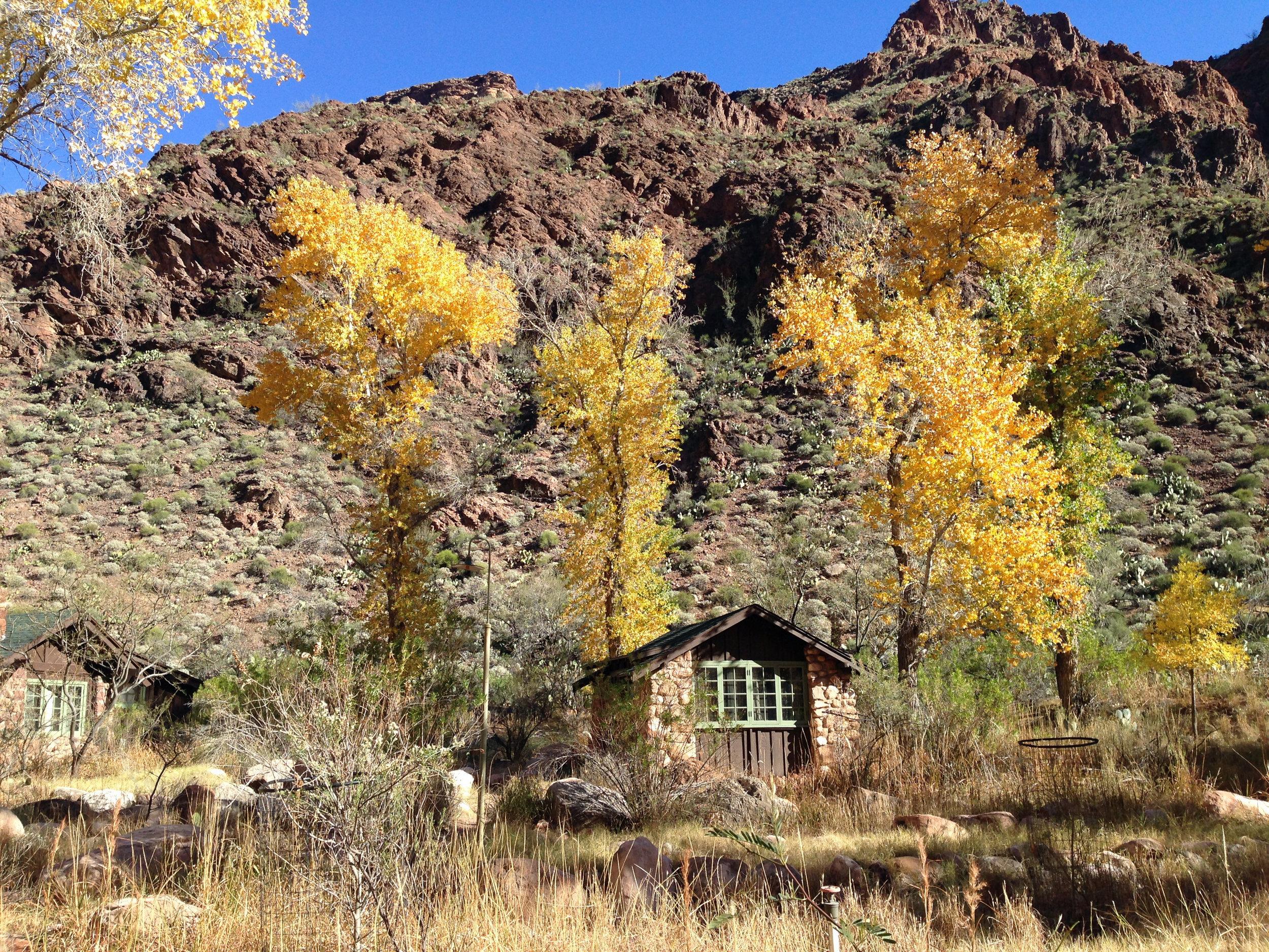 Fall_foliage_at_Phantom_Ranch.JPG