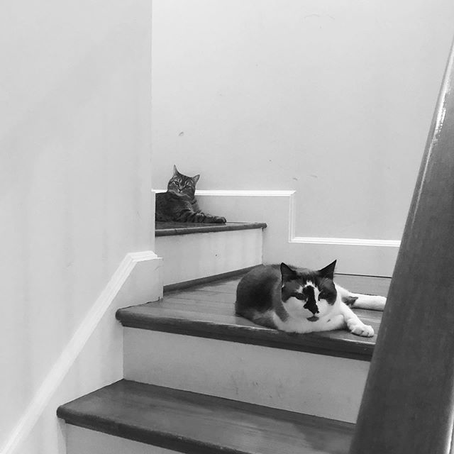 The crew is really settling into #stairlife. #stoopkids #newhomeowners #sendhelp #baltimore #charmcity