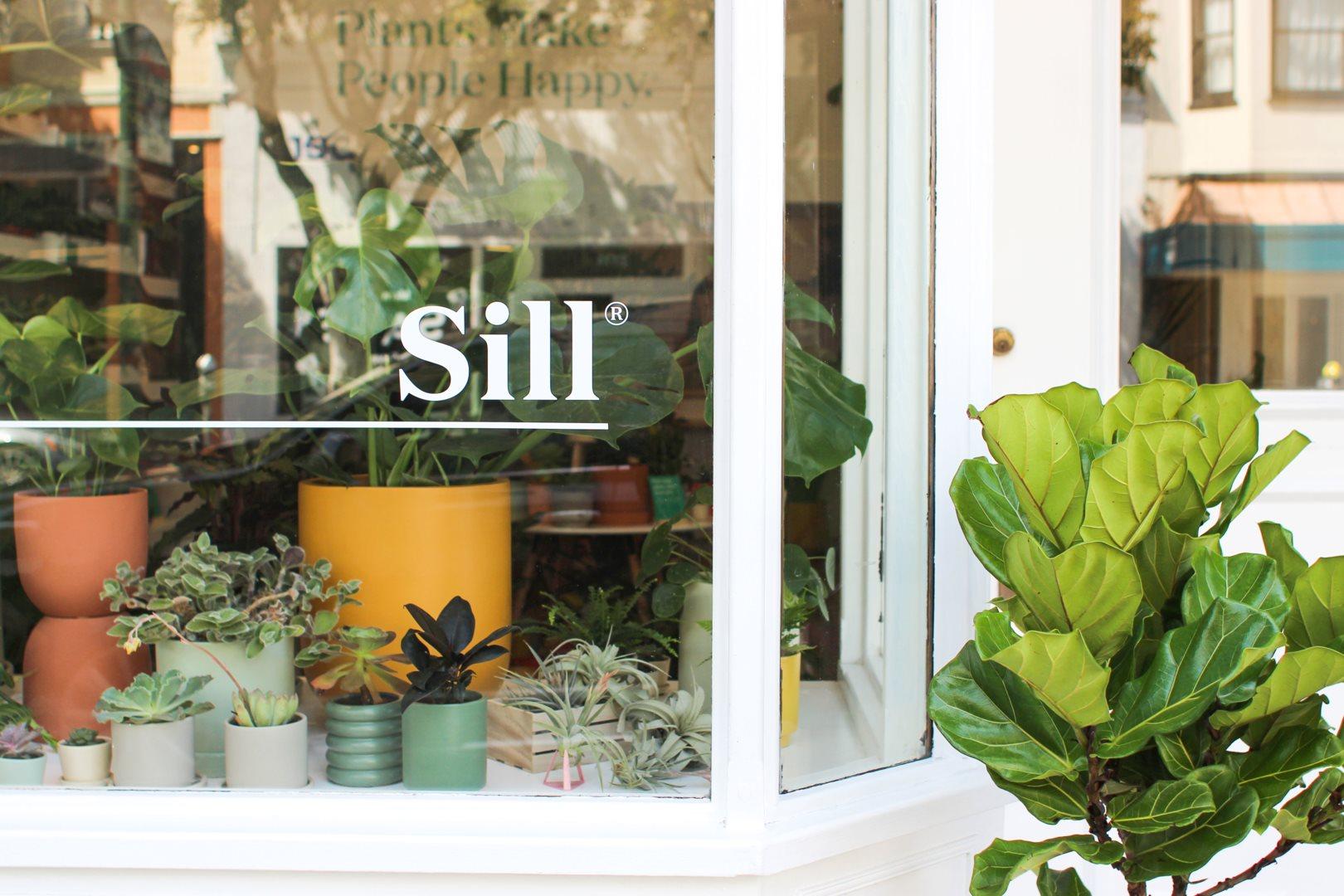 Photo:  Elizabeth Wang /The Sill