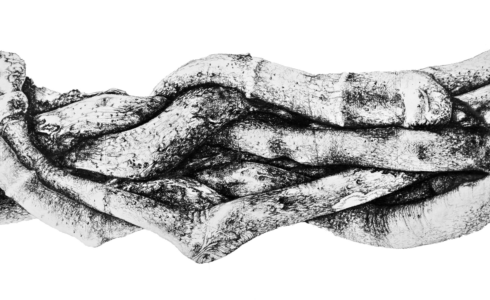 Untitled (Sin título), 2013 - From the series Roots