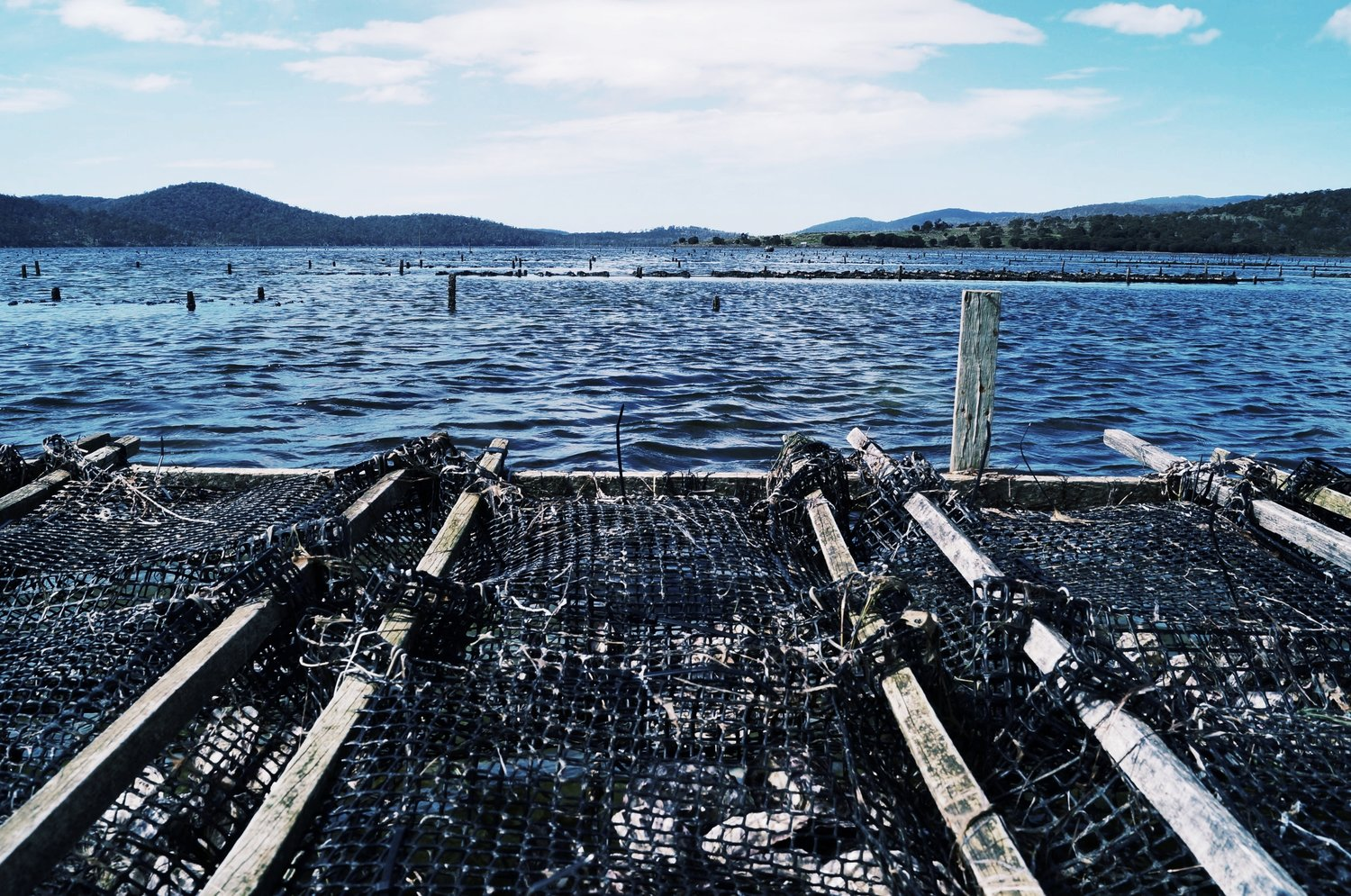 Blackman-Bay-Oyster-Farm.jpg