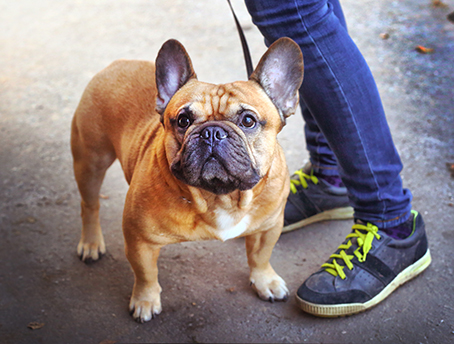 Job Dog day care walker