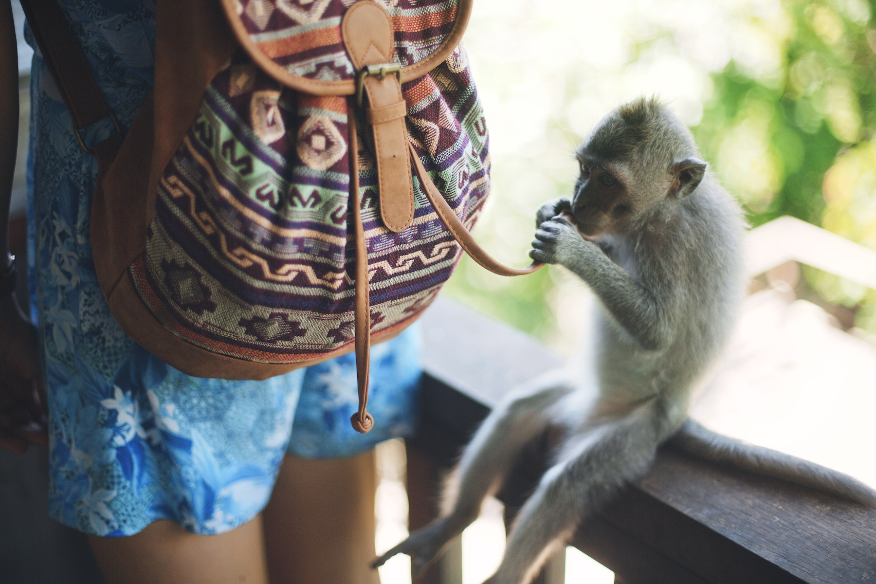 Monkeyforest-web [12 of 18] [Image by Jarrad Seng].jpg
