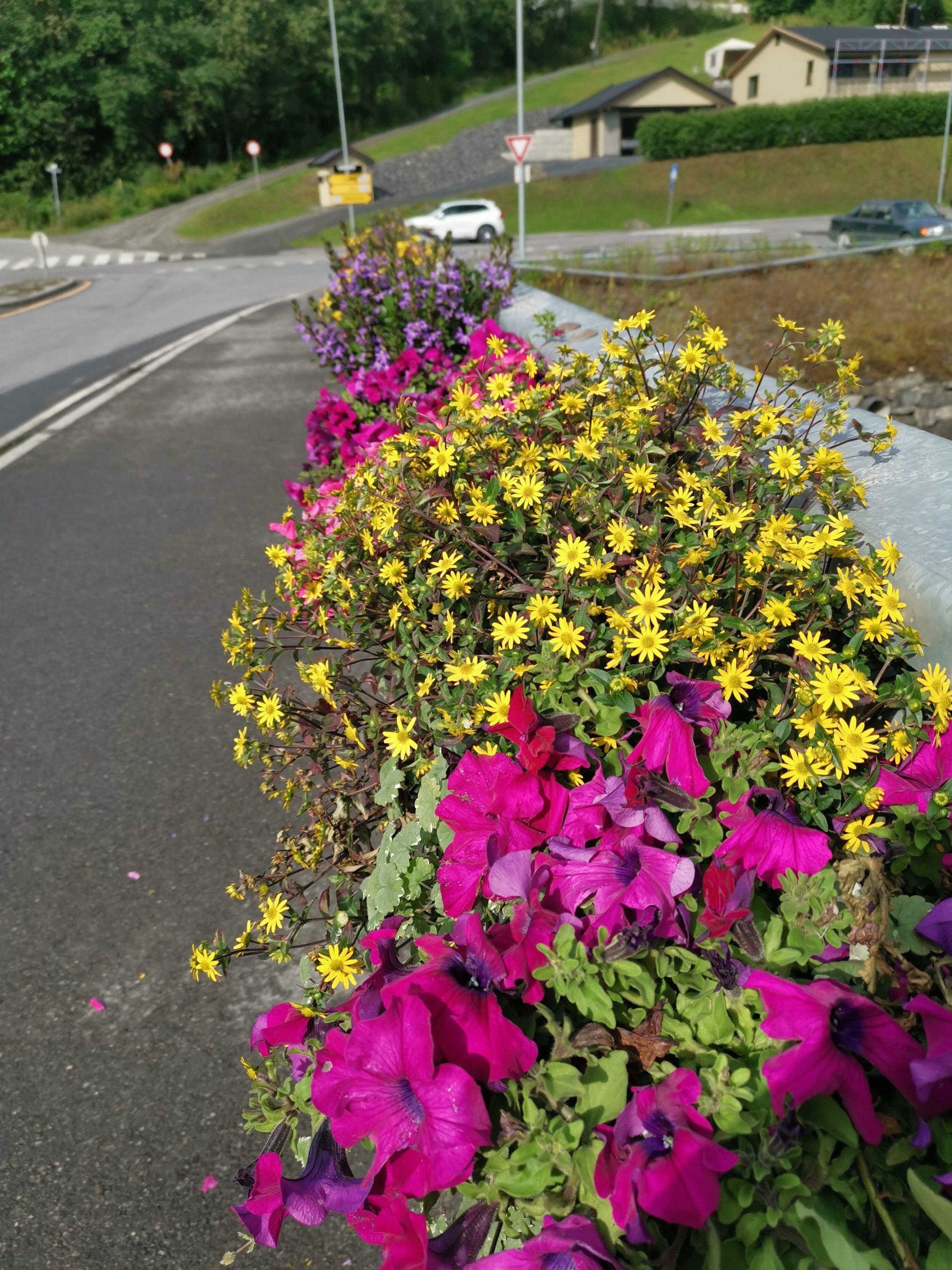 Blomsterbrua.jpg