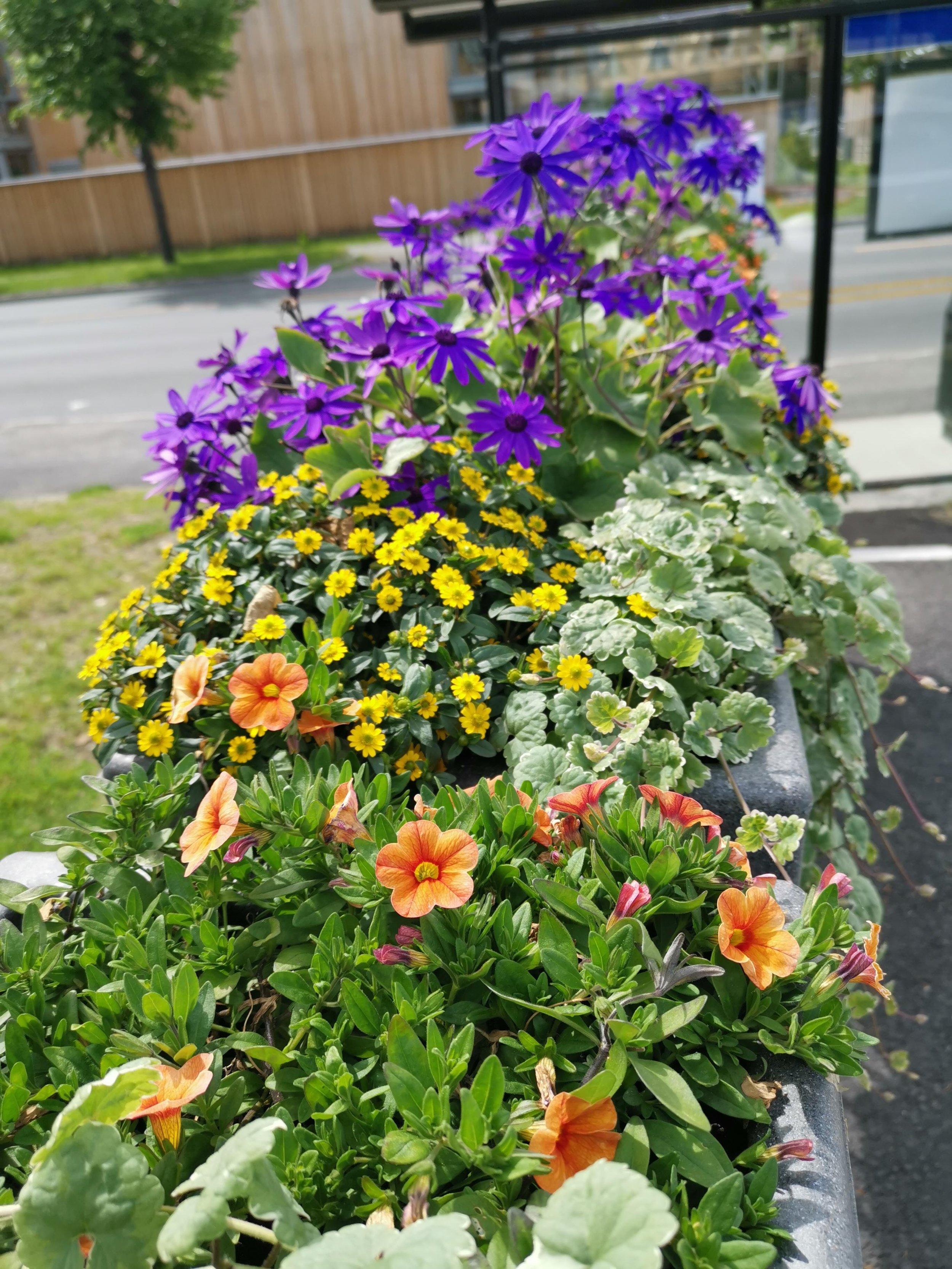 Blomsterfaberggt2..jpg