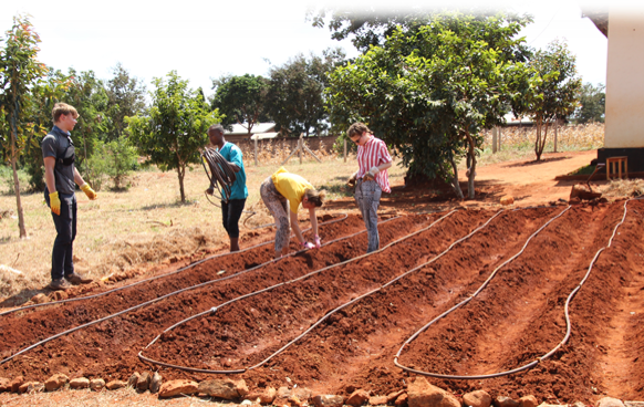 Tansania Tropfbewässerungsfeld.png