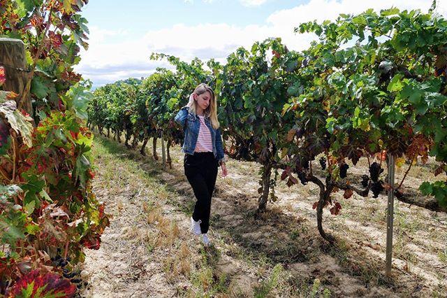 Os estamos preparando un vídeo de nuestra ruta por La Rioja! 👏🏻👏🏻 Aunque nos está costando más de lo que esperábamos... 🤦🏼♀ ¿Quién dijo que ser Youtuber era fácil🤔? Que nos expliquen a nosotros cómo comprimir 5 horas de contenido en poco más de 10 minutos! 🤯 Pero lo que si que tenemos ya preparado es el post de la ruta! 🌍 Como siempre, link en la bio! . . #somostravelholics . . #larioja #logroño #lariojaapetece #lariojaturismo #rioja #travel #españa #riojaalta #picoftheday #instagram #natural #turismo #lariojatodoelaño #blogger #navarra #naturaleza #trekking #nature #instagood #landscape #bodegas #travelblogger #iamtraveler #travelgirl #girlslovetotravel
