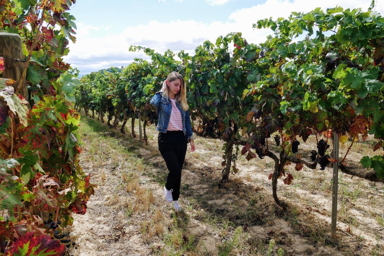 Viñedos La Rioja - Travelholics