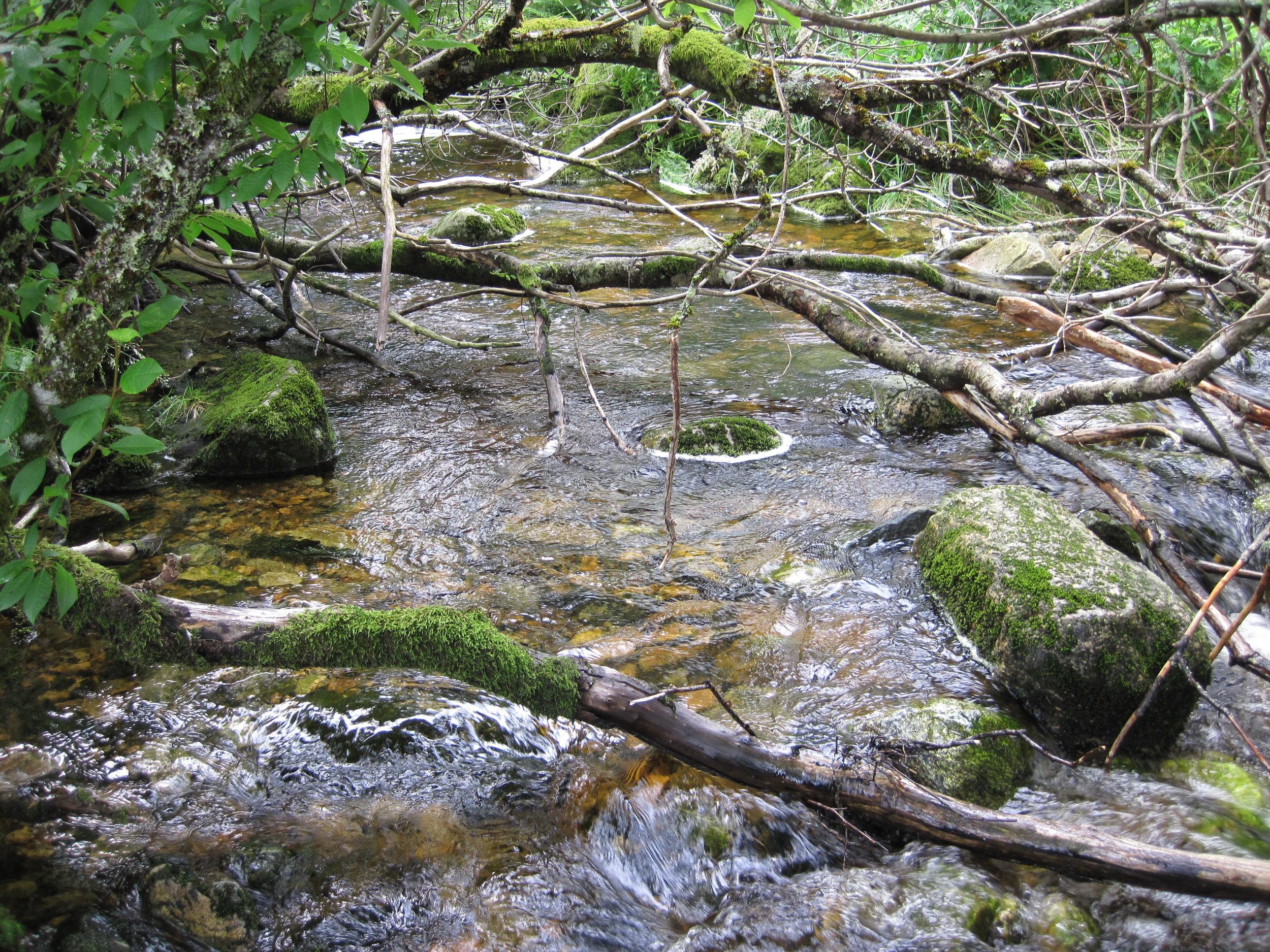 En produktiv gytebekk for sjø-ørret, med masse skjul, gytegrus, stei, døde og levende trær  Foto: Ulrich Pulg, Uni Miljø