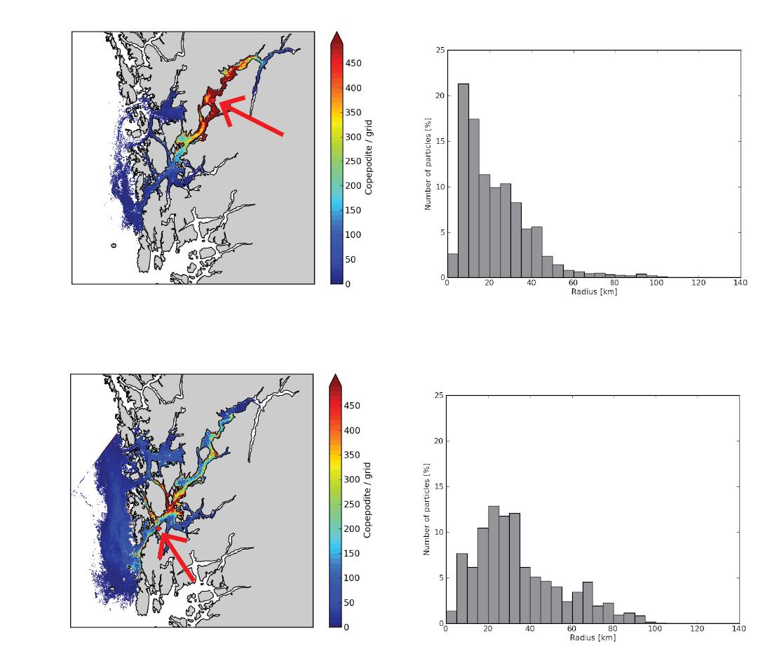 Figur 2.  Simulert copepodittetthet (venstre) og spredningsdistanse for copepodittene (høyre) fra kilden (rød pil, rød firkant) for utslipp i indre Hardangerfjord (øverst) og ytre Hardangerfjord (nederst) i perioden 2. mai- 9. juni, 2007.