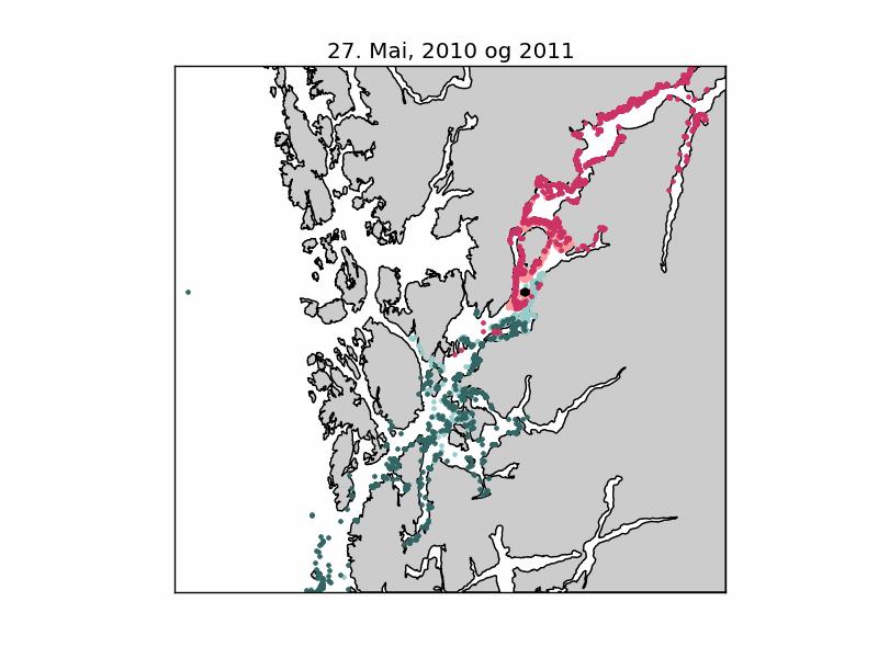Figur 3. (Også animasjon) Posisjonen til lakselus den 27. mai 2010 (grønne prikker) og 2011 (røde prikker), spredt fra en kilde (sort prikk) midt i Hardangerfjorden (utenfor Løvfallstrand) Det har vært et kontinuerlig utslipp med 1 lus/time siden 1. mai.