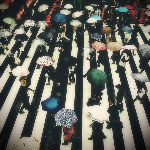 Crosswalk in Full Bloom by Mutablend