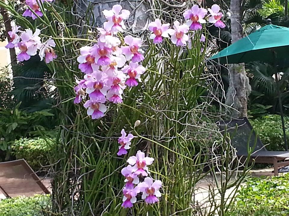 orchids_..jpg
