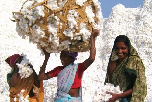 Organic Cotton.jpg