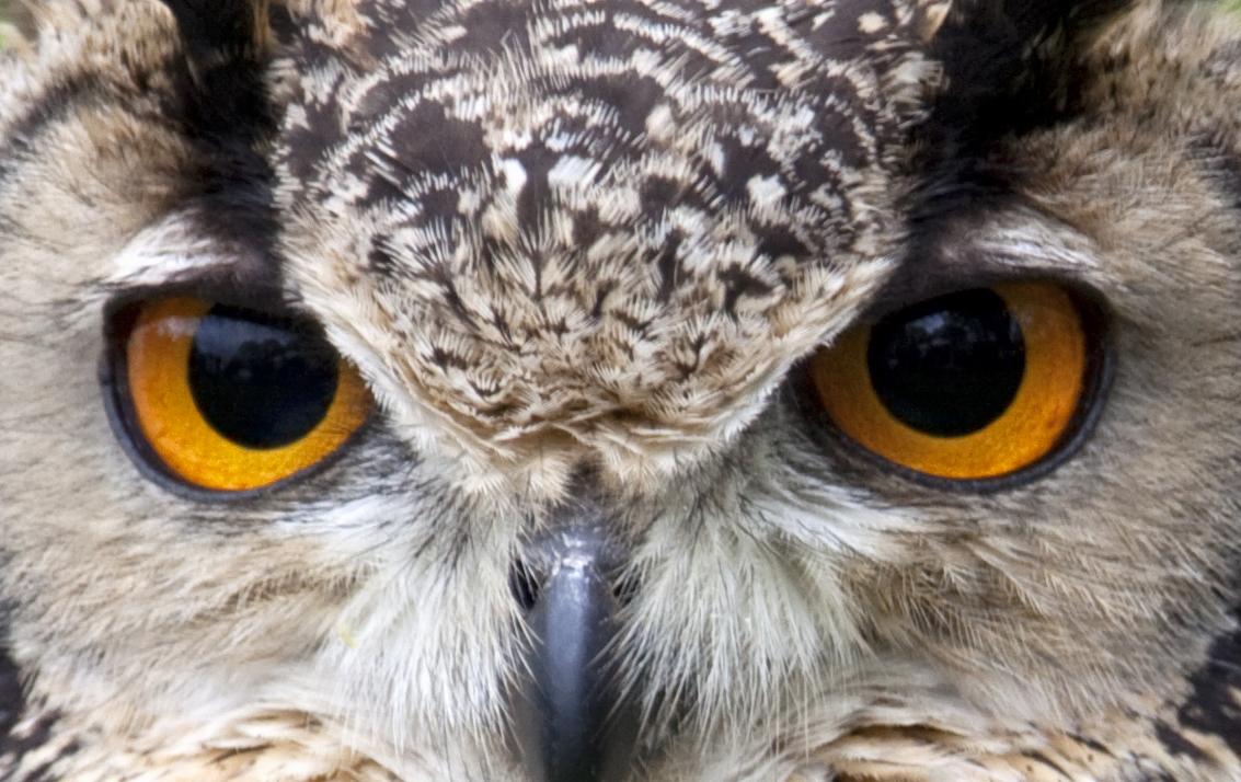Owl eyes photo © Tony Hisgett | Flickr licensed under  CC BY 2.0