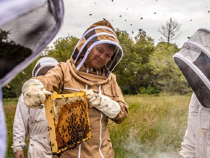 Arnaud Montebourg examinant l'une des ruches du projet Bleu Blanc Ruche (Crédits photo : Romain Smiljkovski)