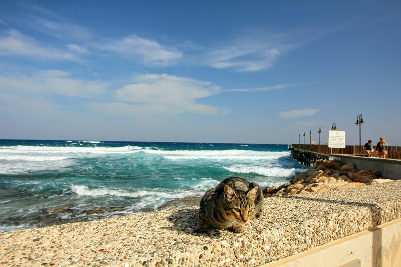 Chat et mer. Crédits photo : Shutterstock