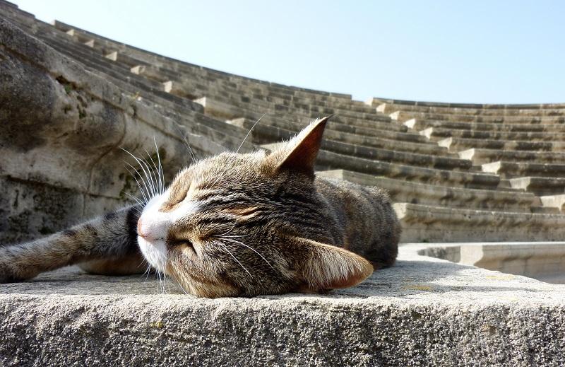 Chat et amphithéâtre. Crédits photo : Shutterstock