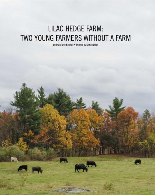 Lilac-Hedge-right-500x630.jpg