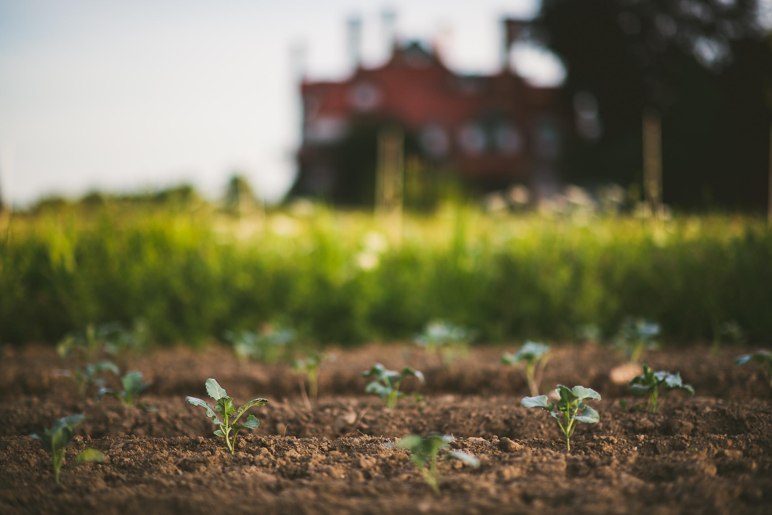 Eustis Estate Farm - Edible Boston-10_WEB.jpg