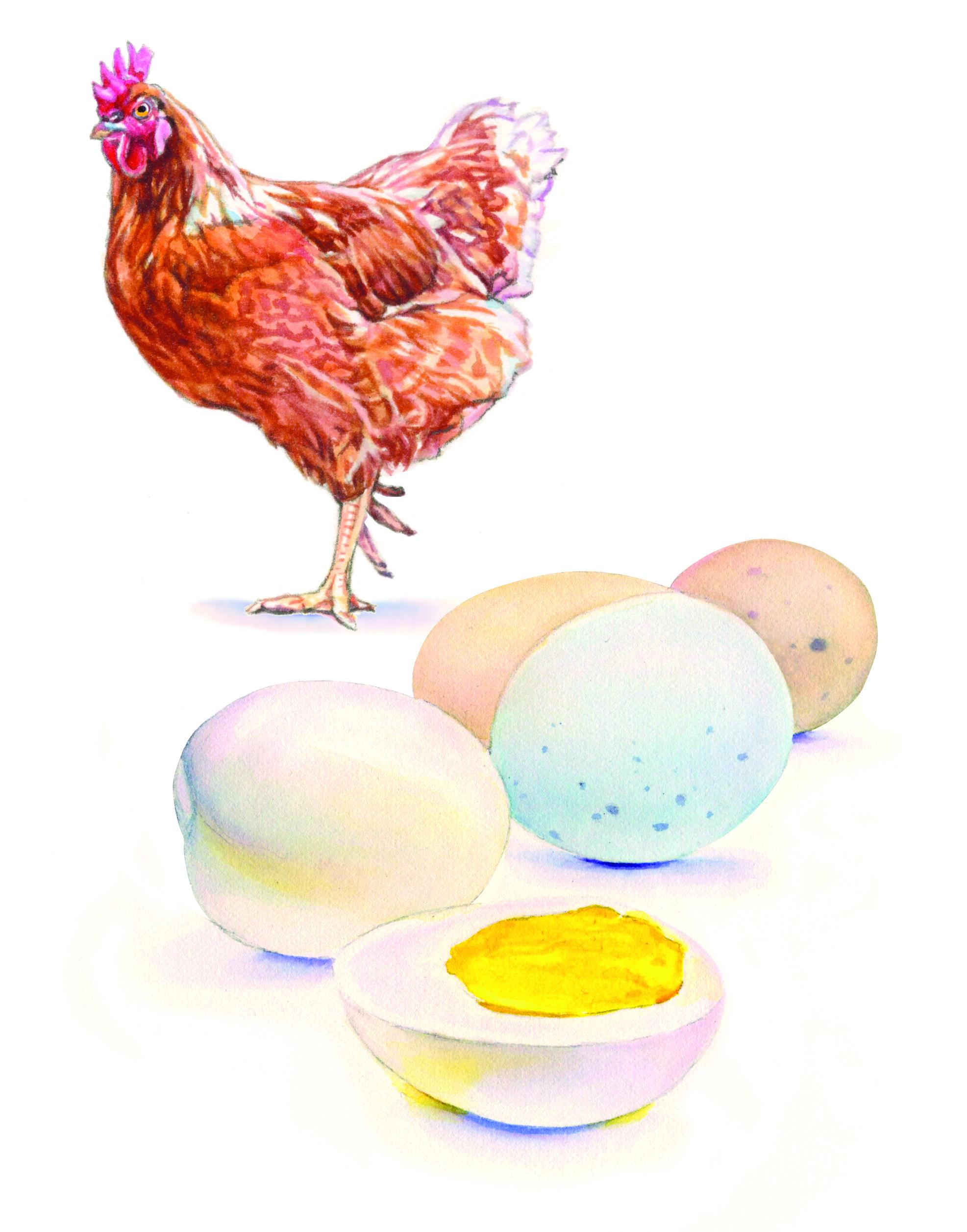 Chicken&Eggs.jpg