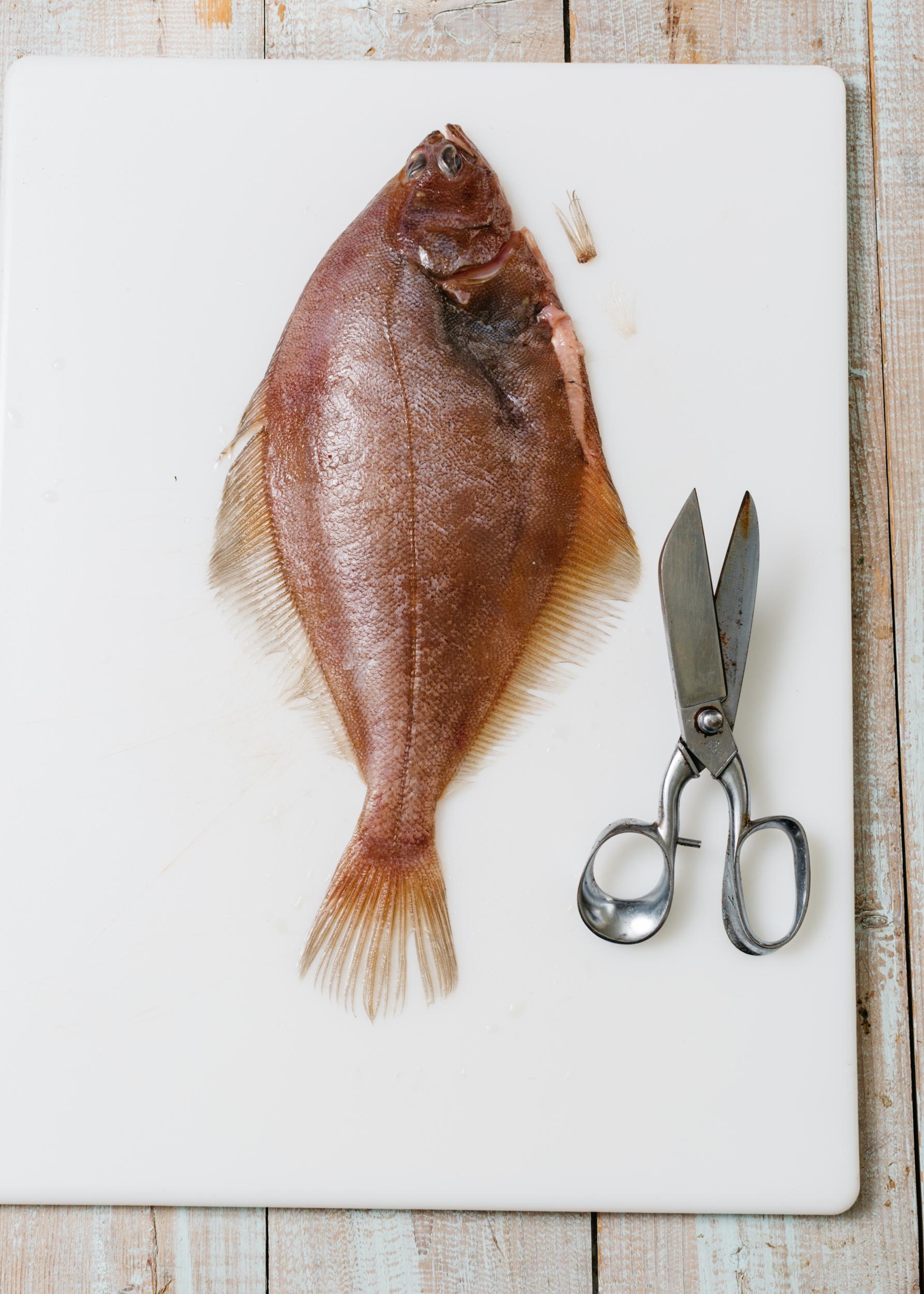 Flounder_Fennel-3475_WEB.jpg