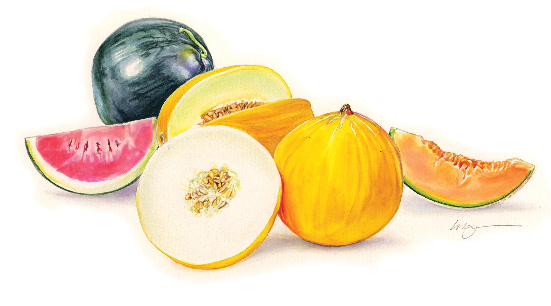 Melon Illustration.png