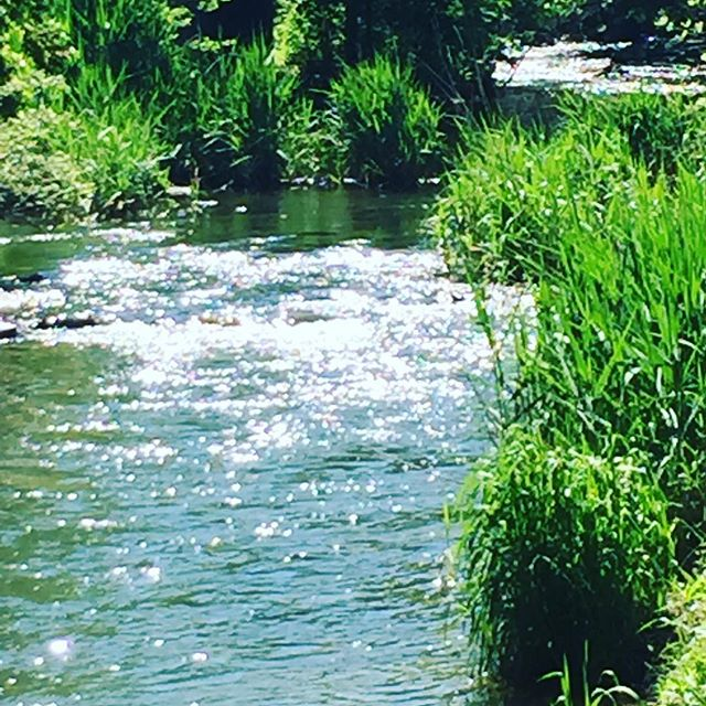 Sparkling Waterway ✨💙 #sparkle #water #creek #nature #spring #green #gorgeous