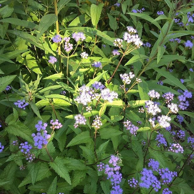 Purple flowers at Omega 💐 #omega #omegainstitute #eckharttolle #retreat #presence #happy #nature #naturephotography