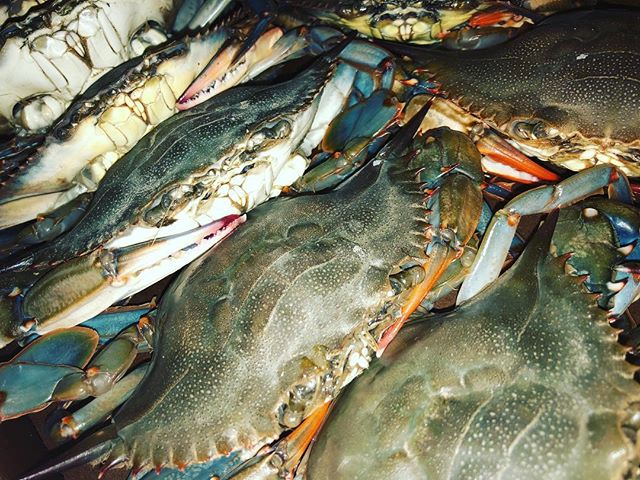 They're baaack!! Fresh Softshell Crab will be on the menu tonight!! Come get em while they last!!