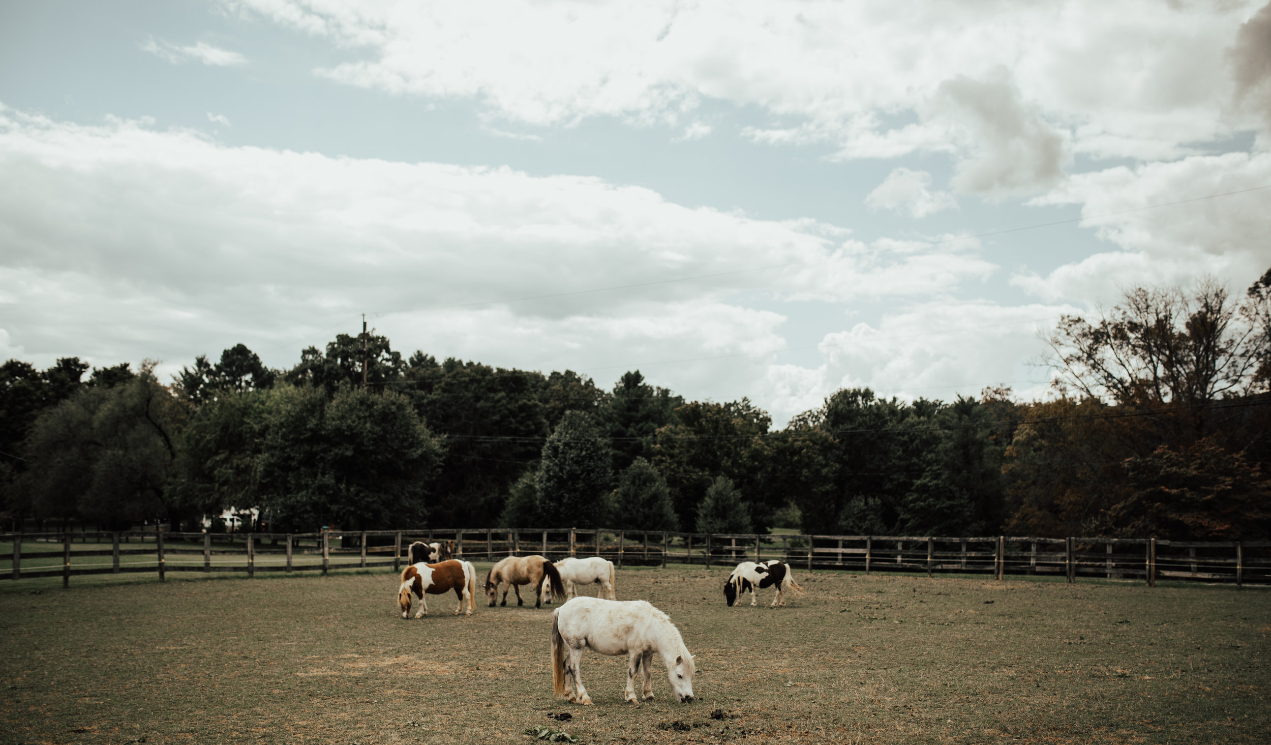 I met up with Annie and Brad at this gorgeous and quaint miniature horse farm. It was such a perfect setting to prepare for a special day.