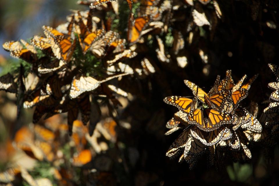 butterflies-807534_960_720.jpg