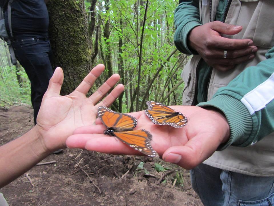 Butterfly_hands.jpg