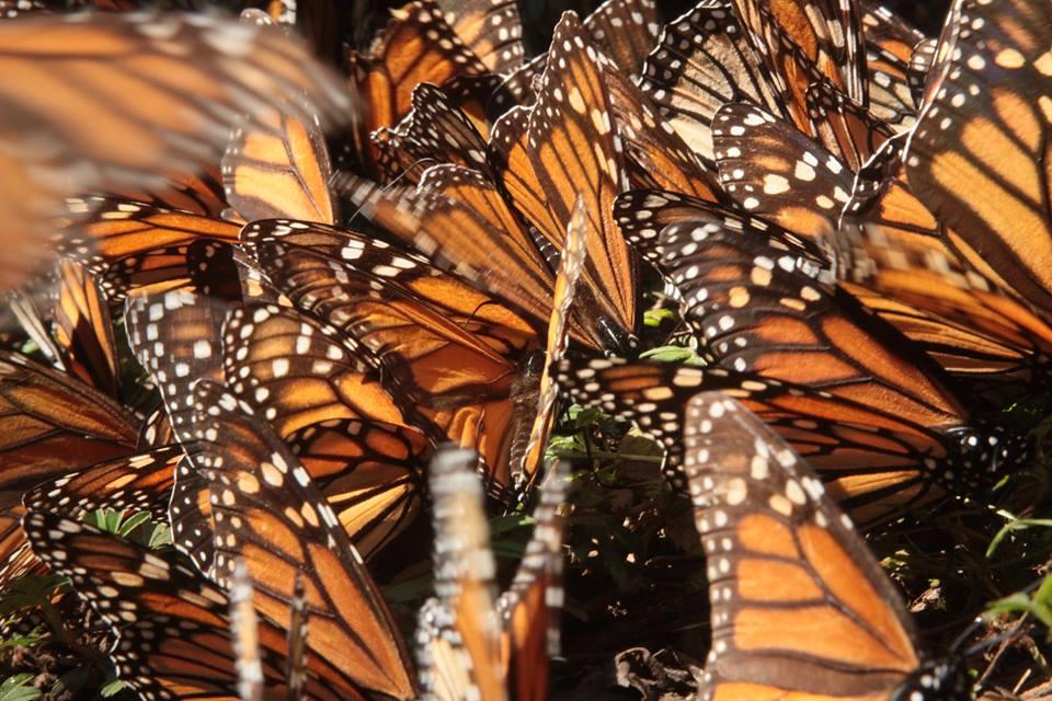 Butterfly_Fill.jpg