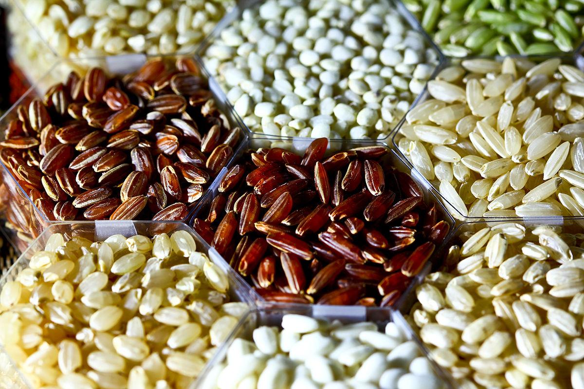International Rice Research Institute