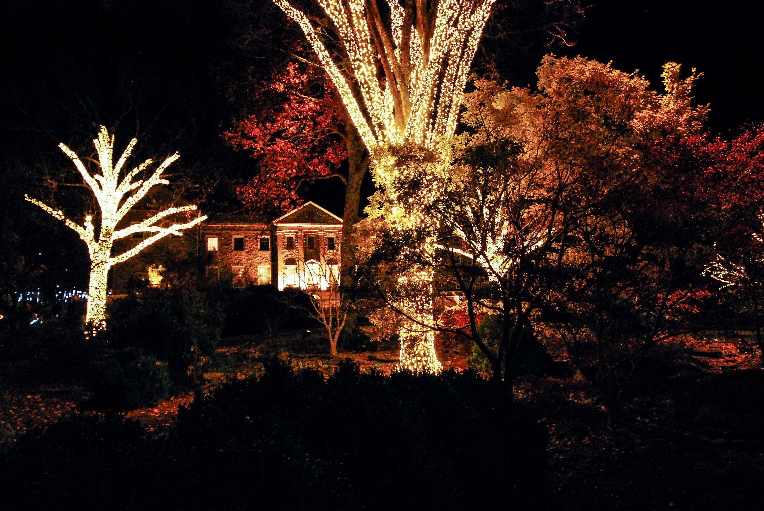 CheekwoodLights17-4.jpg