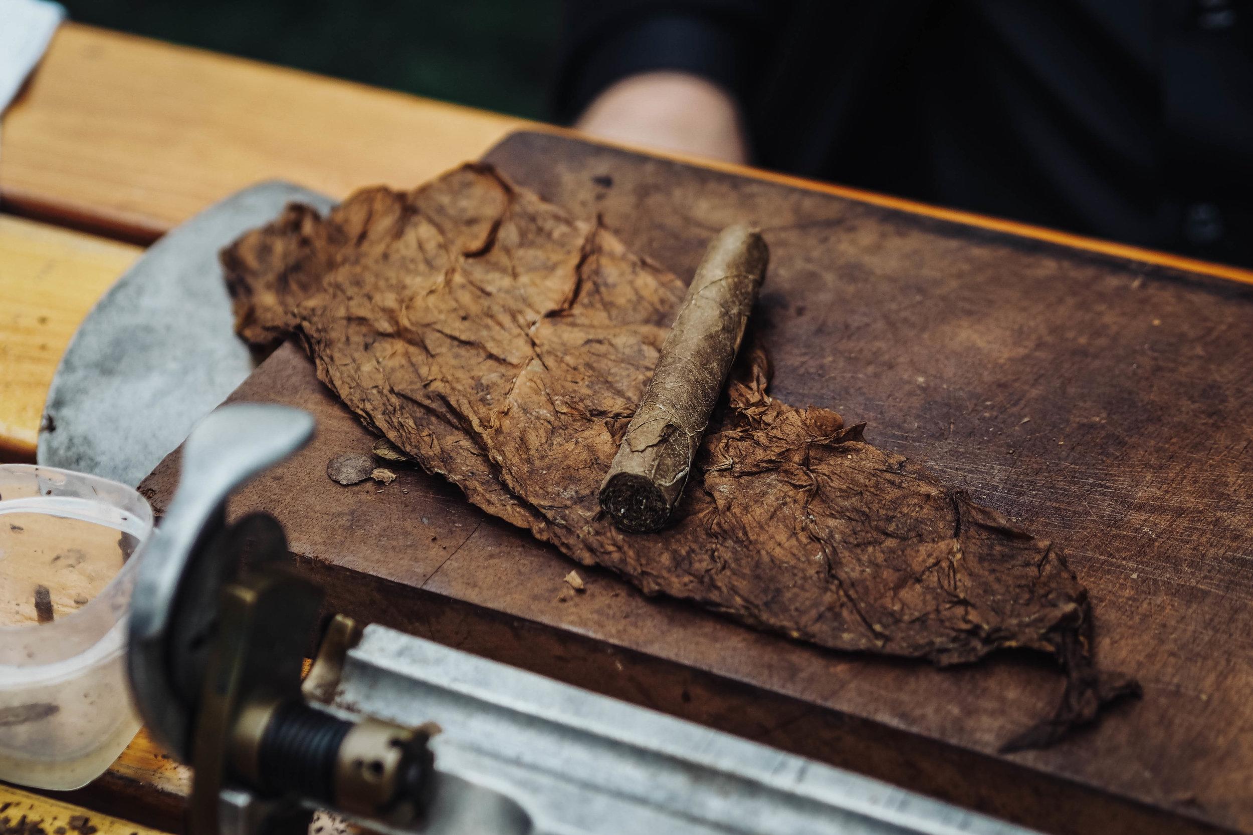 Cigar tobacco leaves.