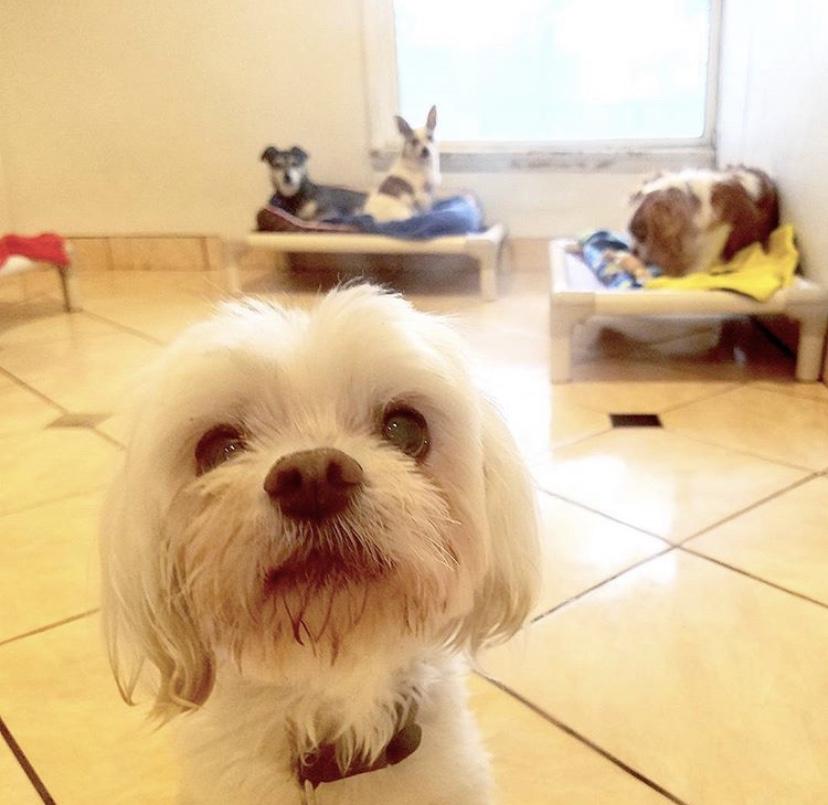 ssdog.jpg