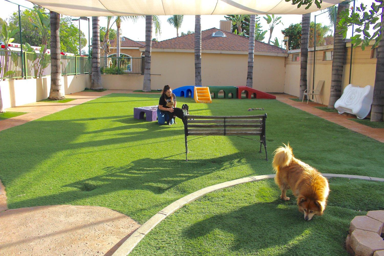 Dog Boarding Heavenly Pet Resort